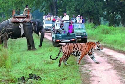 Short Escape to Corbett Image